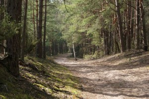 Дорога через ліс у Кампіноському національному парку