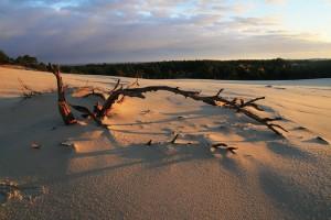 Плаваючі піски і ліс у Словінському національному парку