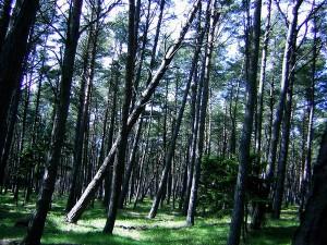 Ліс у Словінському національному парку
