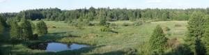 Вид на Біловезький національний парк