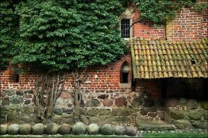 Замок Мальборк - Стіна з деревом