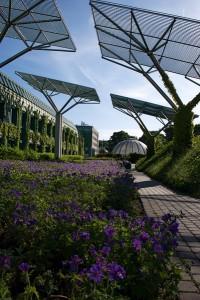 Ботанічний сад на даху. Бібліотека Варшавського університету