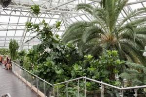 Пальмова оранжерея. Зелена Гура