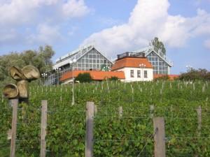 Виноградний парк. Зелена Гура