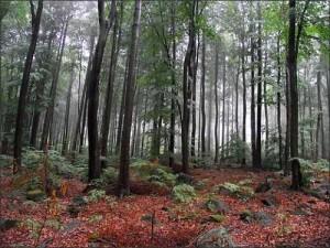 Чорний Ліс, Поляниця -Здруй