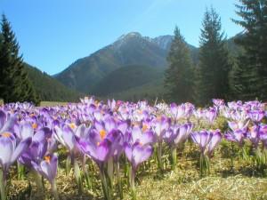 Татри весною
