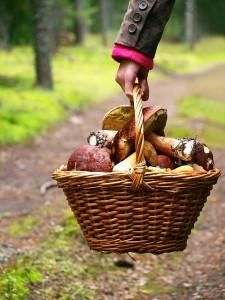 У Польщу за грибами