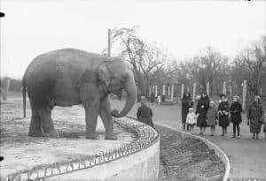 Слон на подіумі, 1933 рік. Варшавський зоопарк