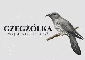 Польські слова рекордсмени